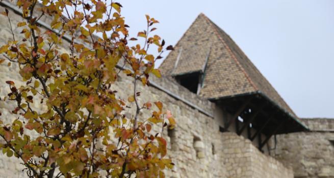 Faültetés az Egri várban